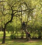 Árboles Arbustos verdes Hierba Verano junio julio mono de los niños tiempo del letstva para jugar Imagen de archivo