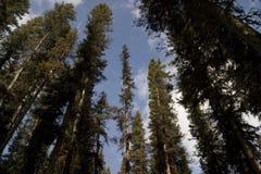 Árboles arriba Imagen de archivo libre de regalías