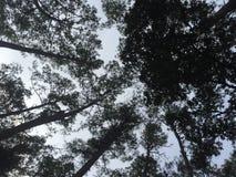 Árboles arriba Foto de archivo libre de regalías