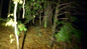 Árboles asustadizos con las raíces en una víctima oscura del bosque metrajes