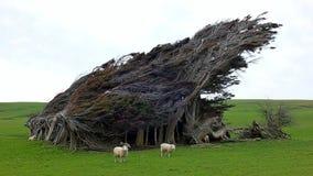Árboles azotados por el viento Imágenes de archivo libres de regalías