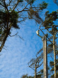 Árboles azotados por el viento y una cámara de seguridad Imagen de archivo