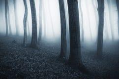 Árboles azules misteriosos del canal de la niebla en bosque en Halloween Imágenes de archivo libres de regalías