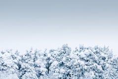 Árboles bajo nevadas fuertes Imagen de archivo