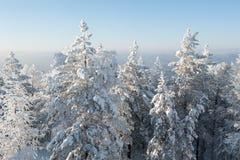 Árboles bajo nevadas fuertes fotos de archivo