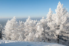 Árboles bajo nevadas fuertes fotos de archivo libres de regalías