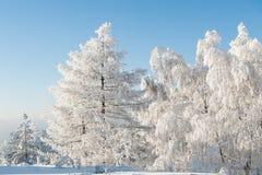Árboles bajo nevadas fuertes fotografía de archivo libre de regalías