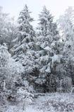 Árboles bajo nieve Imágenes de archivo libres de regalías