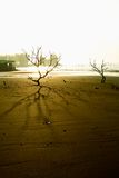 Árboles balding del misterio Fotografía de archivo libre de regalías