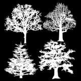Árboles blancos en un fondo negro Fotografía de archivo libre de regalías