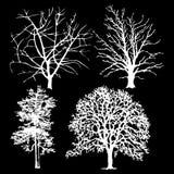 Árboles blancos en un fondo negro Imagenes de archivo