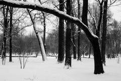 Árboles blancos y negros Imagenes de archivo