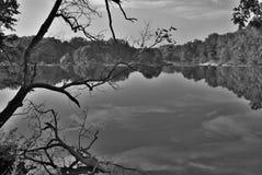 Árboles blancos y negros por el río Imagenes de archivo