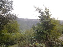 Árboles, bosque Fotografía de archivo