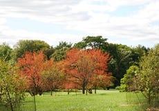 Árboles brillantemente coloreados del moho con un cielo magnífico en Morton Arboretum fotos de archivo libres de regalías