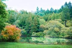 Árboles brillantemente coloreados del moho con un cielo magnífico en Morton Arboretum fotografía de archivo