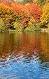 Árboles brillantes del otoño Fotografía de archivo