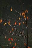 Árboles brumosos Imagenes de archivo