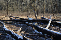 Árboles caidos Imagen de archivo libre de regalías