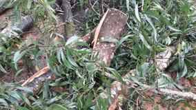 Árboles caidos Foto de archivo libre de regalías