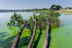 Árboles caidos en el lago; en Barragem de Magos, Salvaterra, vire hacia el lado de babor fotografía de archivo