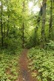 Árboles caidos en el rastro, gobernador Knowles State Forest, Wisconsin Foto de archivo libre de regalías
