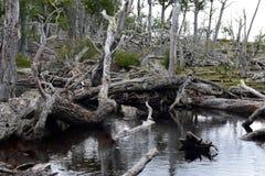 Árboles caidos en la orilla de Lago Blanco Imágenes de archivo libres de regalías