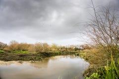 Árboles caidos en los bancos del río tejo del río en Salvaterra fotos de archivo libres de regalías