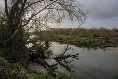 Árboles caidos en los bancos del río tejo del río en Salvaterra foto de archivo