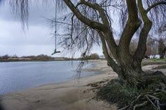 Árboles caidos en los bancos del río tejo del río en Salvaterra imágenes de archivo libres de regalías