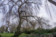 Árboles caidos en los bancos del río tejo del río en Salvaterra fotografía de archivo