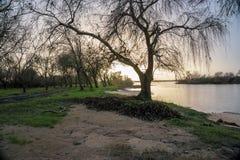 Árboles caidos en los bancos del río tejo del río en Salvaterra imagen de archivo libre de regalías