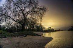 Árboles caidos en los bancos del río tejo del río en Salvaterra fotos de archivo
