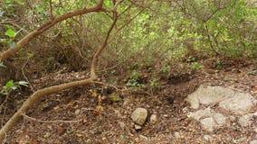 Árboles caidos en un bosque bajo Imágenes de archivo libres de regalías