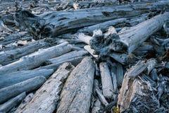 Árboles caidos muertos en Washington State Imagen de archivo