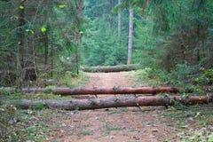 Árboles caidos que bloquean el camino Imagen de archivo libre de regalías