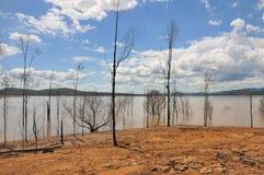 Árboles calvos después de la inundación en la presa de Wivenhoe, Australia Foto de archivo libre de regalías