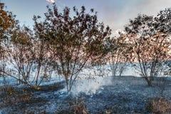 Árboles carbonizados Fotos de archivo libres de regalías