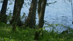 Árboles cerca de la orilla del lago almacen de video