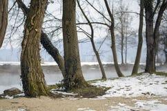 Árboles cerca de la primavera geotérmica Fotografía de archivo libre de regalías