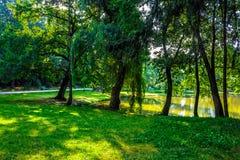 Árboles cerca de una charca en parque de la ciudad Imágenes de archivo libres de regalías