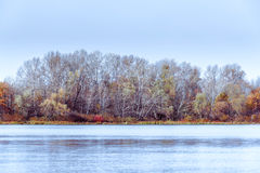 Árboles cerca del río de Dnieper en otoño Imagenes de archivo