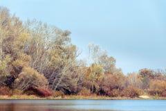 Árboles cerca del río de Dnieper en otoño Fotografía de archivo
