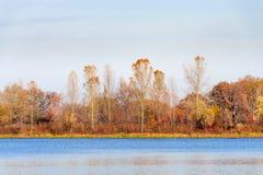 Árboles cerca del río de Dnieper en otoño Fotografía de archivo libre de regalías
