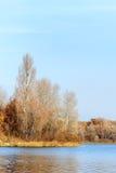 Árboles cerca del río de Dnieper en otoño Foto de archivo