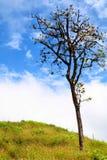 Árboles, cielo e hierba. Imagen de archivo libre de regalías