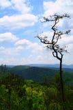 Árboles, cielo y salvaje. Fotos de archivo libres de regalías