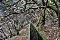 Árboles circundados en la ruta de 25 Fontes en Madeira Imágenes de archivo libres de regalías