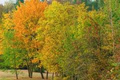 Árboles coloreados Imagenes de archivo