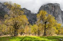 Árboles coloreados caída Fotos de archivo